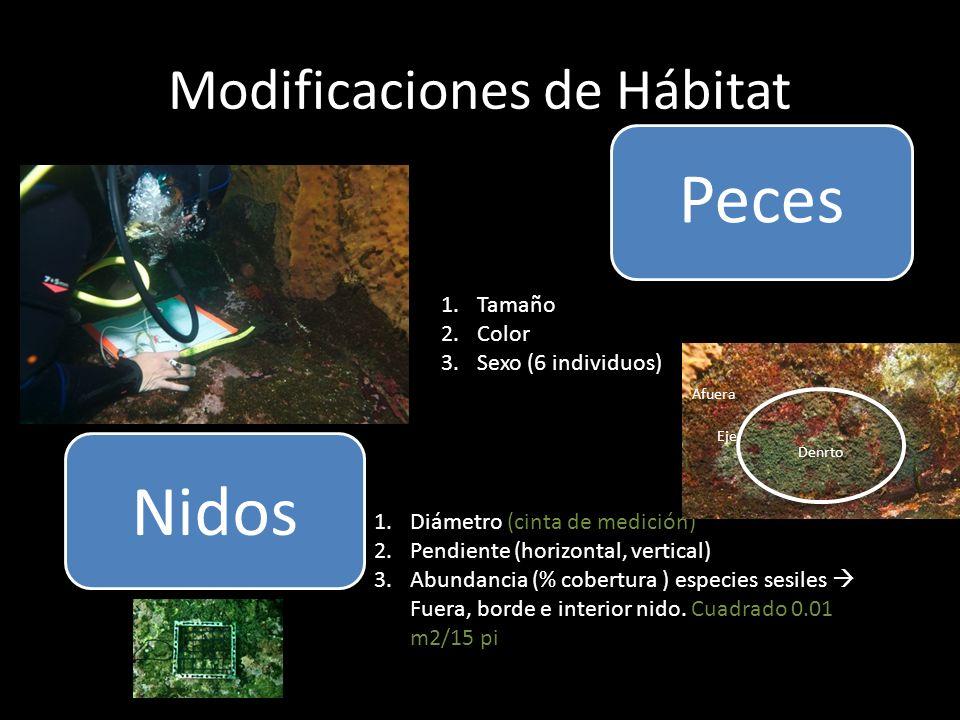 Modificaciones de Hábitat Peces Nidos 1.Diámetro (cinta de medición) 2.Pendiente (horizontal, vertical) 3.Abundancia (% cobertura ) especies sesiles Fuera, borde e interior nido.