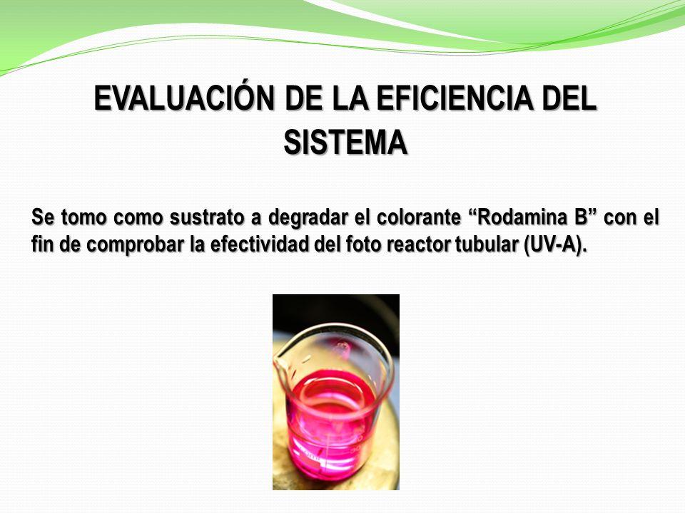 EVALUACIÓN DE LA EFICIENCIA DEL SISTEMA Se tomo como sustrato a degradar el colorante Rodamina B con el fin de comprobar la efectividad del foto reactor tubular (UV-A).