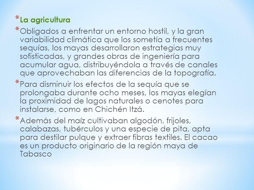 * La agricultura * Obligados a enfrentar un entorno hostil, y la gran variabilidad climática que los sometía a frecuentes sequías, los mayas desarrollaron estrategias muy sofisticadas, y grandes obras de ingeniería para acumular agua, distribuyéndola a través de canales que aprovechaban las diferencias de la topografía.