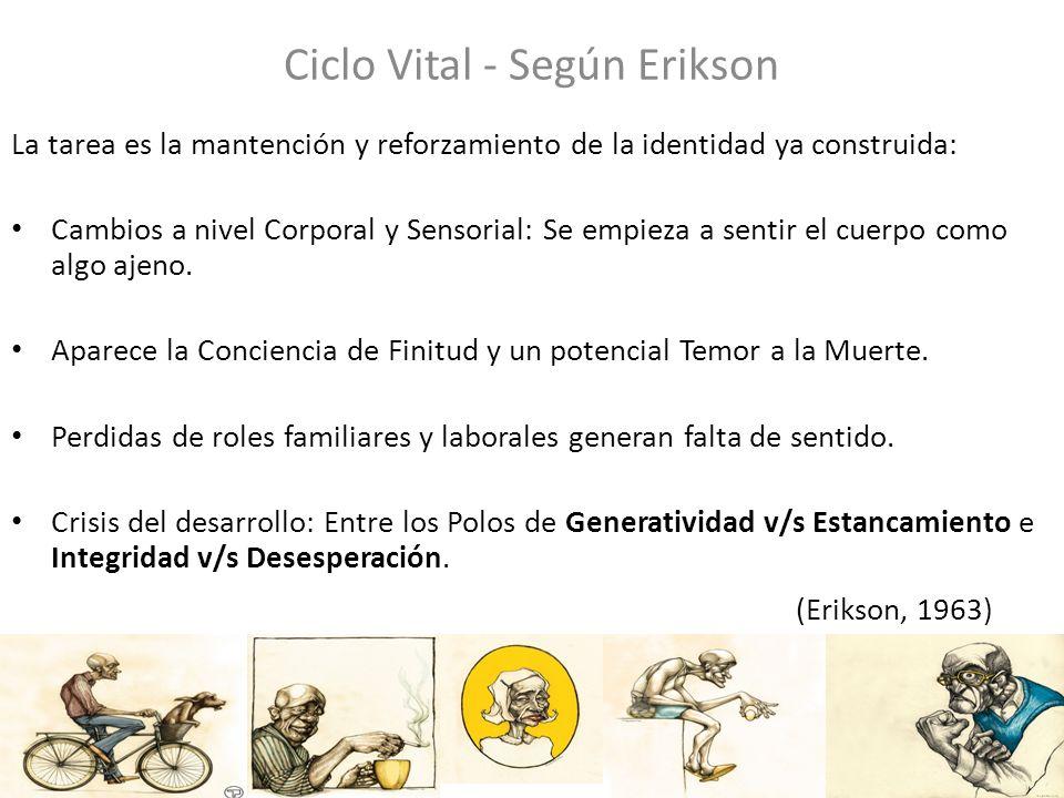 Ciclo Vital - Según Erikson La tarea es la mantención y reforzamiento de la identidad ya construida: Cambios a nivel Corporal y Sensorial: Se empieza