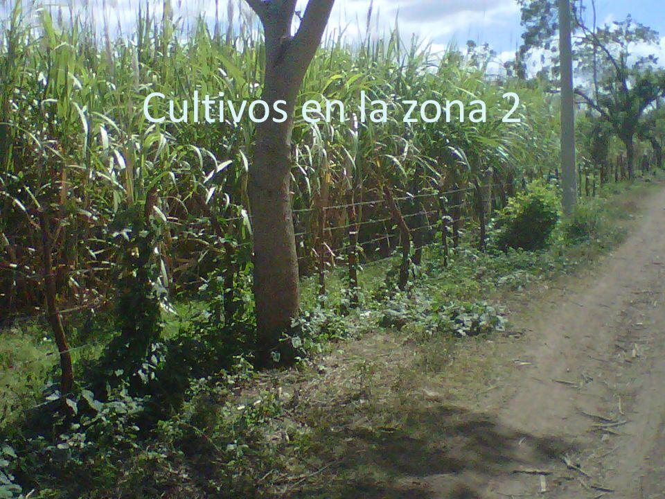 Cultivos en la zona 2