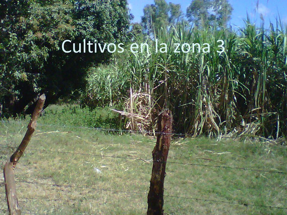 Cultivos en la zona 3
