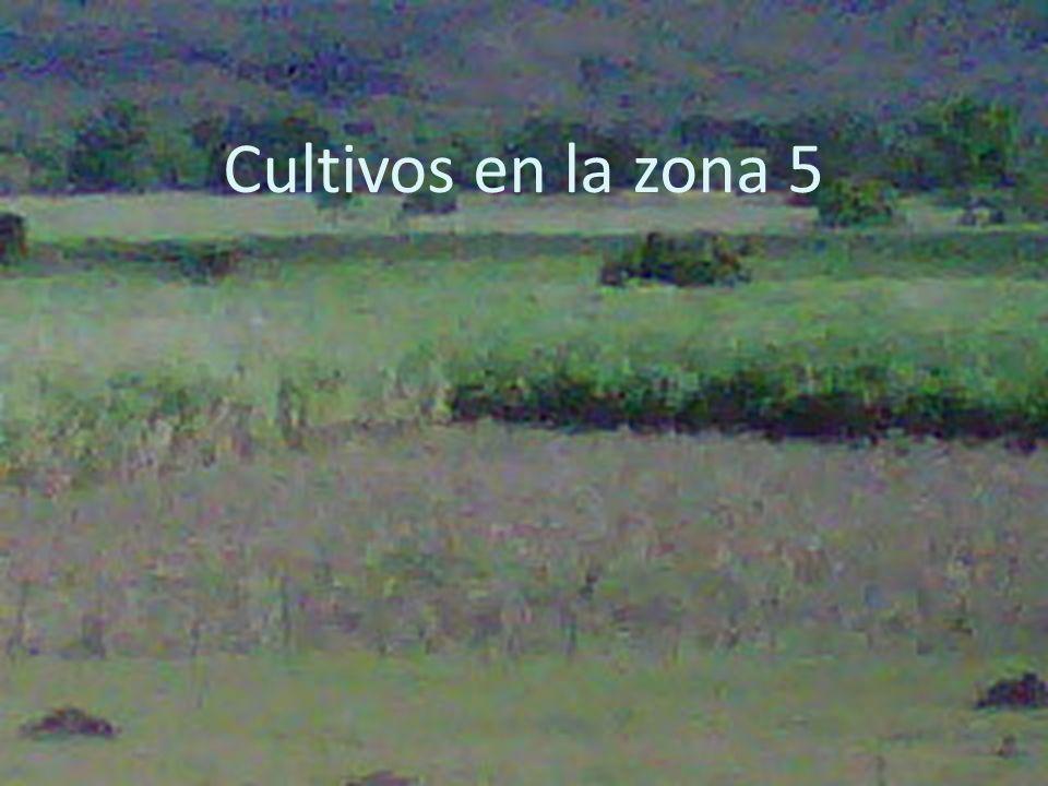 Cultivos en la zona 5