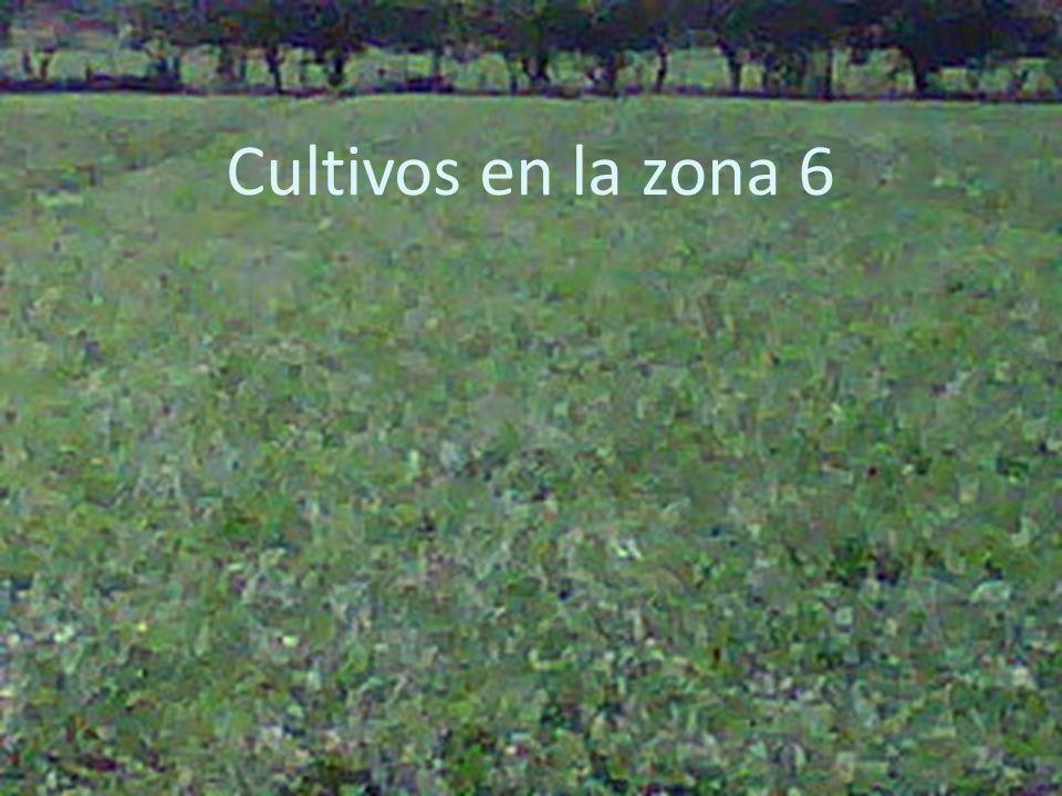 Cultivos en la zona 6