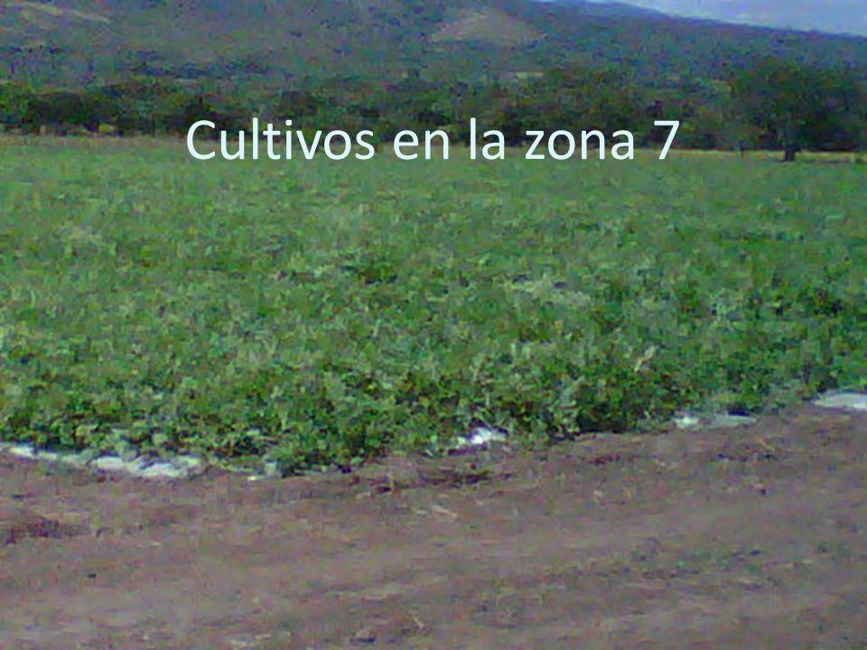 Cultivos en la zona 7