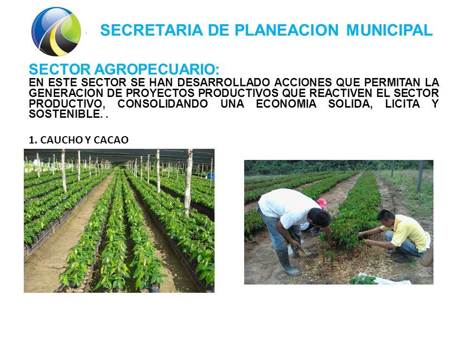 SECRETARIA DE PLANEACION MUNICIPAL SECTOR AGROPECUARIO: EN ESTE SECTOR SE HAN DESARROLLADO ACCIONES QUE PERMITAN LA GENERACION DE PROYECTOS PRODUCTIVOS QUE REACTIVEN EL SECTOR PRODUCTIVO, CONSOLIDANDO UNA ECONOMIA SOLIDA, LICITA Y SOSTENIBLE..