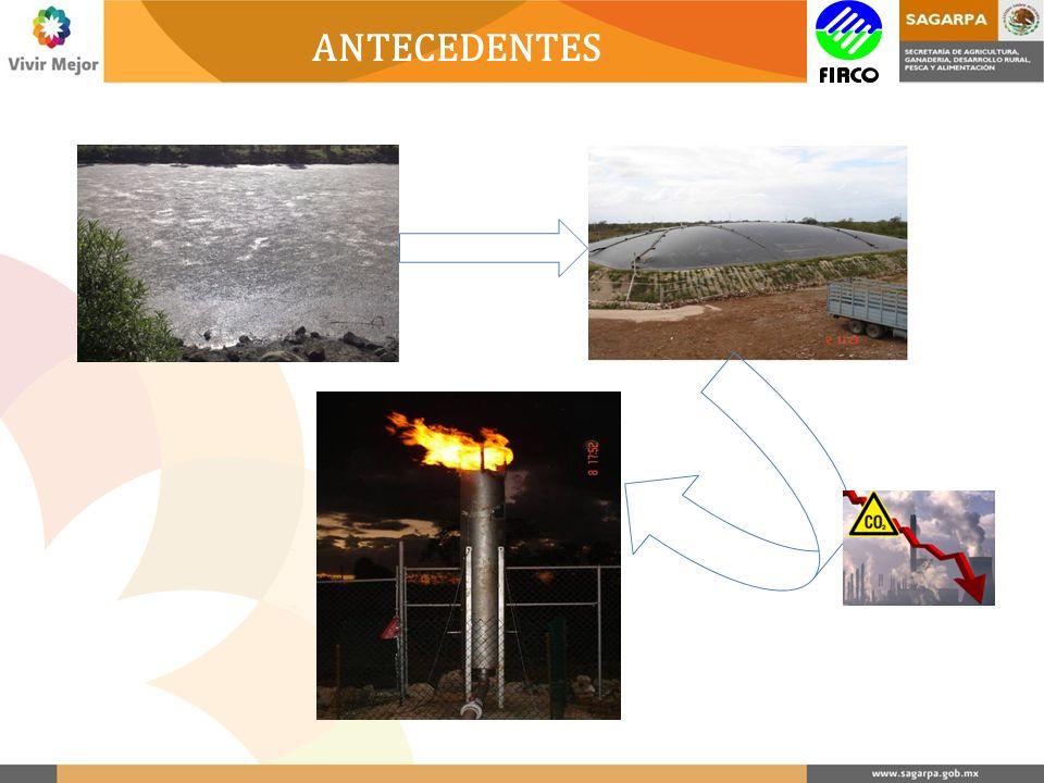 DIMENSIONAMIENTO 1.- Tipo y disponibilidad de la biomasa Determinación basada en la información proveniente de la operación de cada unidad productiva.