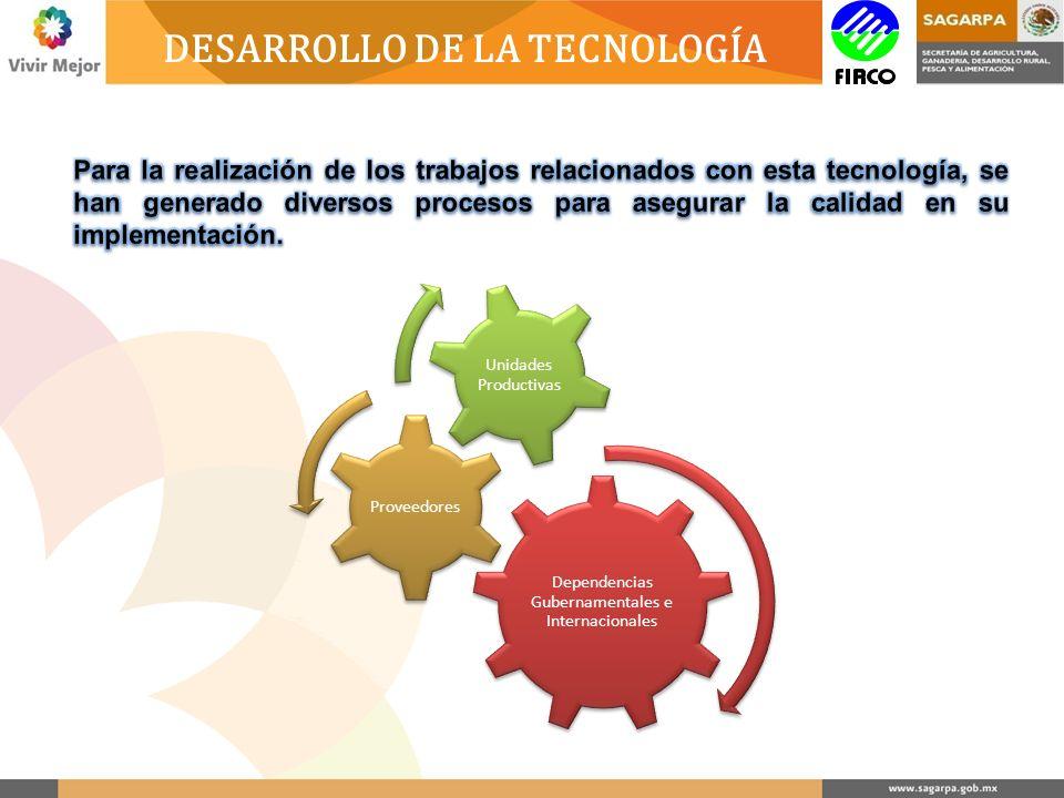 DESARROLLO DE LA TECNOLOGÍA Dependencias Gubernamentales e Internacionales Proveedores Unidades Productivas