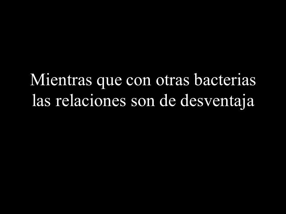 Por ejemplo con las bacterias Con algunas de las cuales establecen relaciones simbióticas