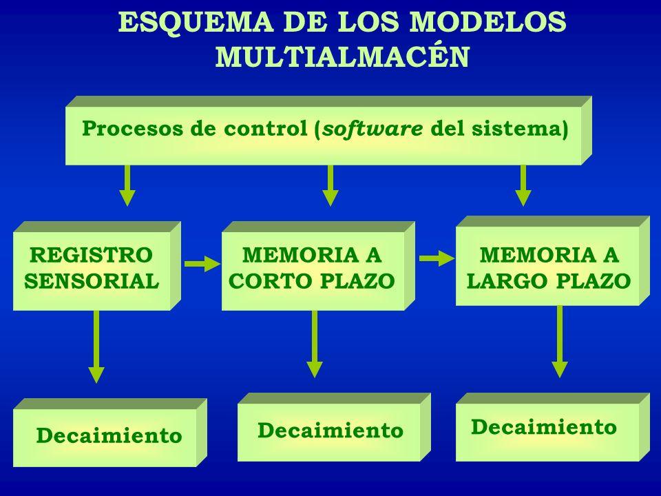 ESQUEMA DE LOS MODELOS MULTIALMACÉN REGISTRO SENSORIAL MEMORIA A CORTO PLAZO Decaimiento MEMORIA A LARGO PLAZO Procesos de control ( software del sist