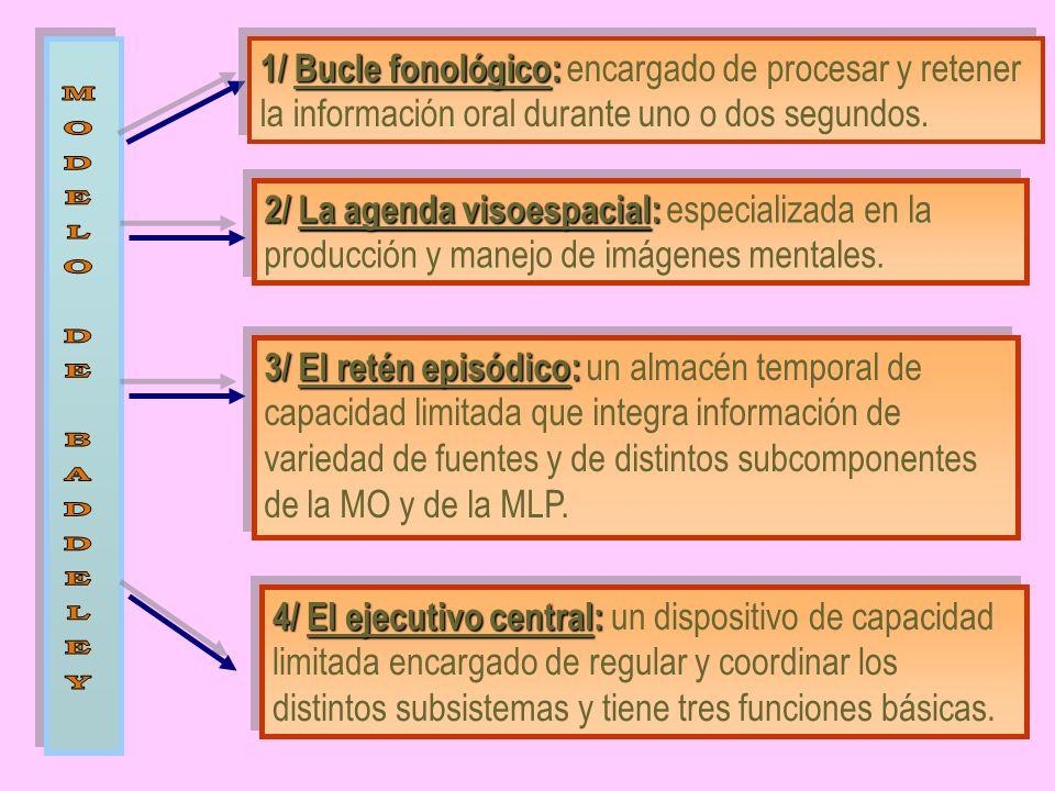 1/ Bucle fonológico: 1/ Bucle fonológico: encargado de procesar y retener la información oral durante uno o dos segundos. 2/ La agenda visoespacial: 2