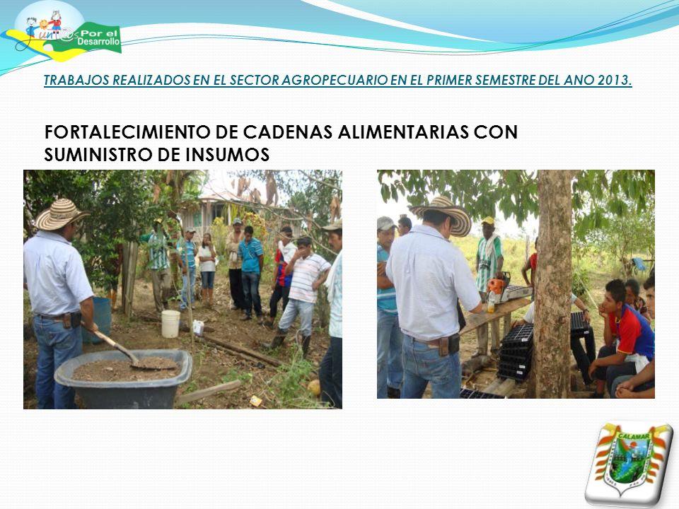 TRABAJOS REALIZADOS EN EL SECTOR AGROPECUARIO EN EL PRIMER SEMESTRE DEL ANO 2013.