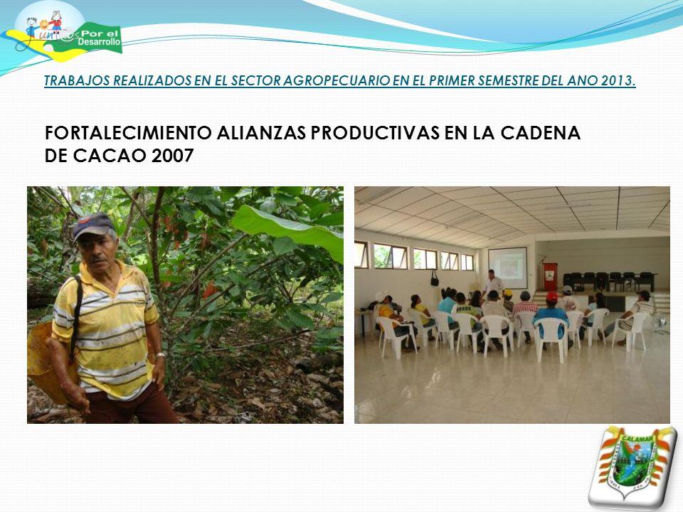 TRABAJOS REALIZADOS EN EL SECTOR AGROPECUARIO EN EL PRIMER SEMESTRE DEL ANO 2013. FORTALECIMIENTO ALIANZAS PRODUCTIVAS EN LA CADENA DE CACAO 2007