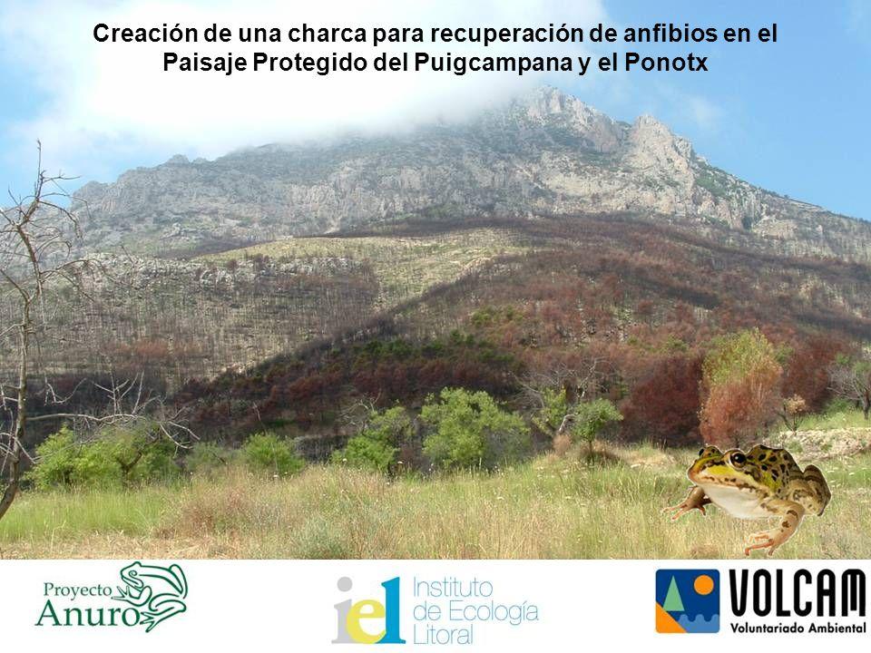 Creación de una charca para recuperación de anfibios en el Paisaje Protegido del Puigcampana y el Ponotx