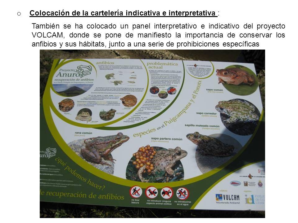 o Colocación de la cartelería indicativa e interpretativa : También se ha colocado un panel interpretativo e indicativo del proyecto VOLCAM, donde se pone de manifiesto la importancia de conservar los anfibios y sus hábitats, junto a una serie de prohibiciones específicas