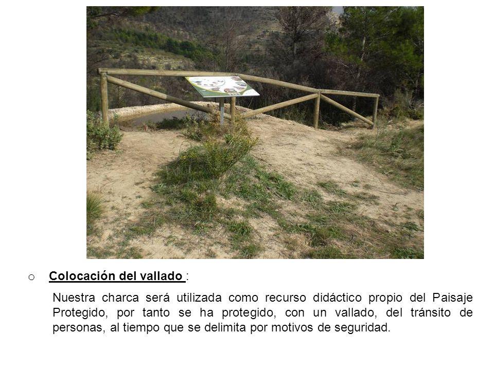 o Colocación del vallado : Nuestra charca será utilizada como recurso didáctico propio del Paisaje Protegido, por tanto se ha protegido, con un vallad