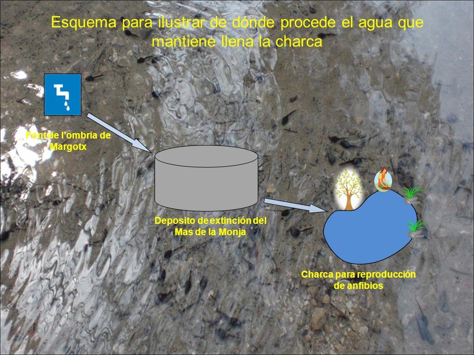 Esquema para ilustrar de dónde procede el agua que mantiene llena la charca Font de lombria de Margotx Deposito de extinción del Mas de la Monja Charca para reproducción de anfibios