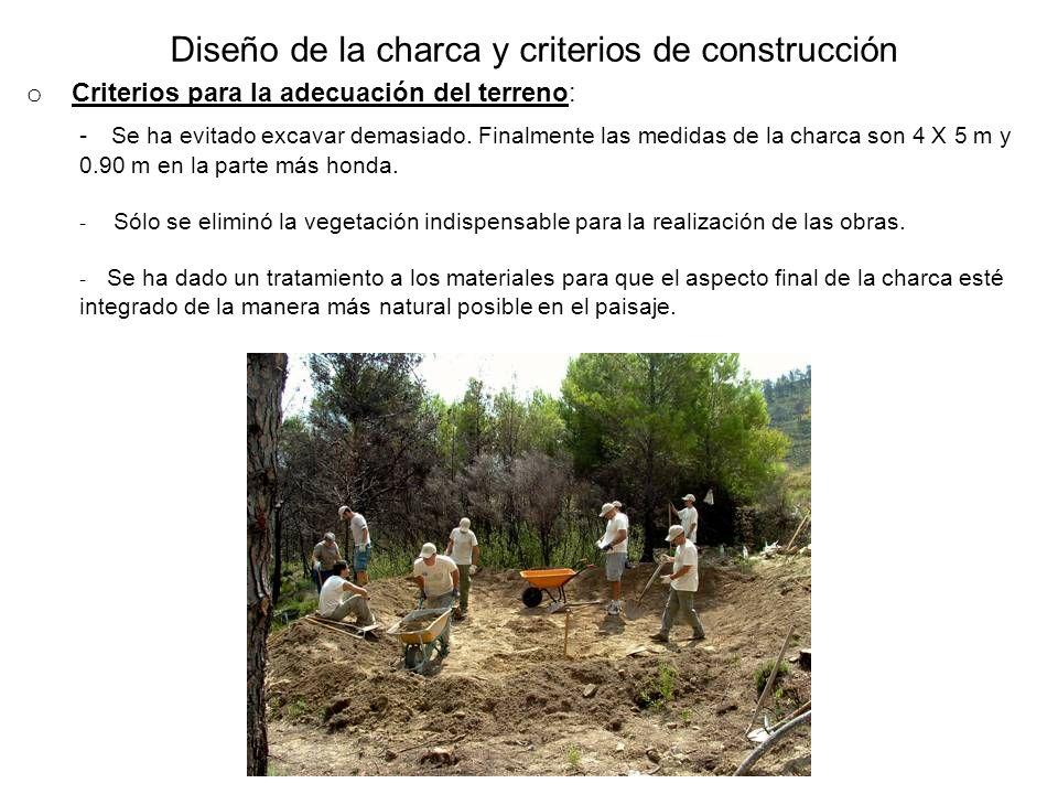 Diseño de la charca y criterios de construcción o Criterios para la adecuación del terreno: - Se ha evitado excavar demasiado. Finalmente las medidas