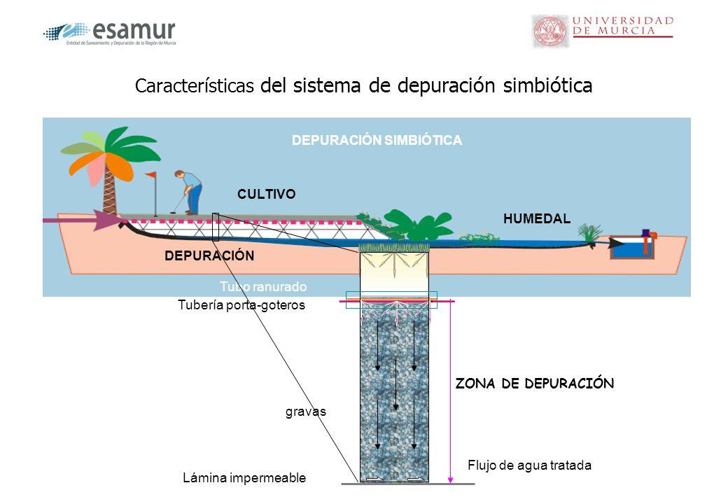 Características del sistema de depuración simbiótica gravas Tubo ranurado Flujo de agua tratada Tubería porta-goteros ZONA DE DEPURACIÓN DEPURACIÓN SI
