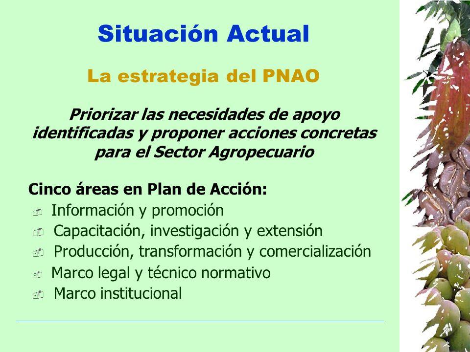 La estrategia del PNAO Información y promoción Capacitación, investigación y extensión Producción, transformación y comercialización Marco legal y téc