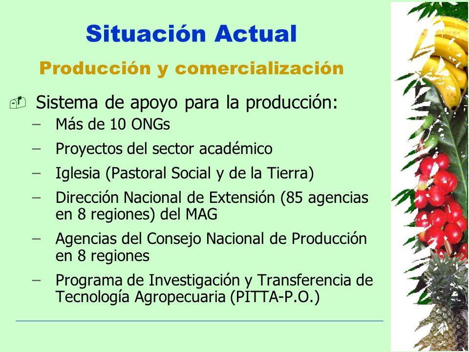 Producción y comercialización Sistema de apoyo para la producción: –Más de 10 ONGs –Proyectos del sector académico –Iglesia (Pastoral Social y de la T