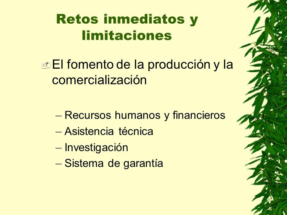 El fomento de la producción y la comercialización –Recursos humanos y financieros –Asistencia técnica –Investigación –Sistema de garantía Retos inmediatos y limitaciones