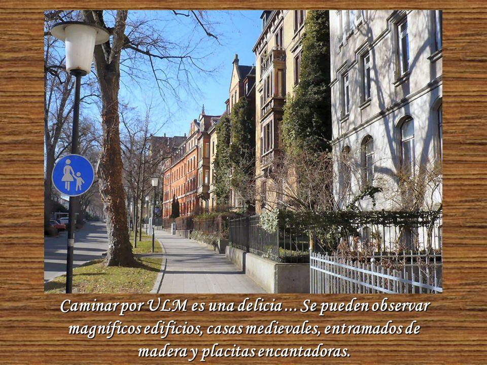 Una tranquila calle con árboles que la adornan de principio a fin