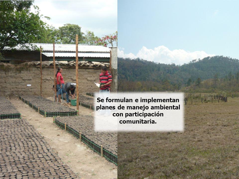 El Programa incentiva la puesta en marcha de programas de pagos por servicios ambientales.