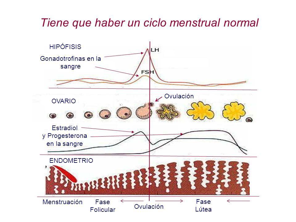 HIPÓFISIS Gonadotrofinas en la sangre Tiene que haber un ciclo menstrual normal Ovulación Fase Folicular Fase Lútea Menstruación ENDOMETRIO Estradiol