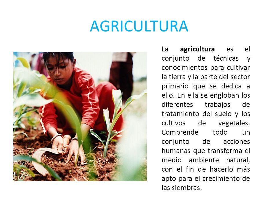 AGRICULTURA La agricultura es el conjunto de técnicas y conocimientos para cultivar la tierra y la parte del sector primario que se dedica a ello. En