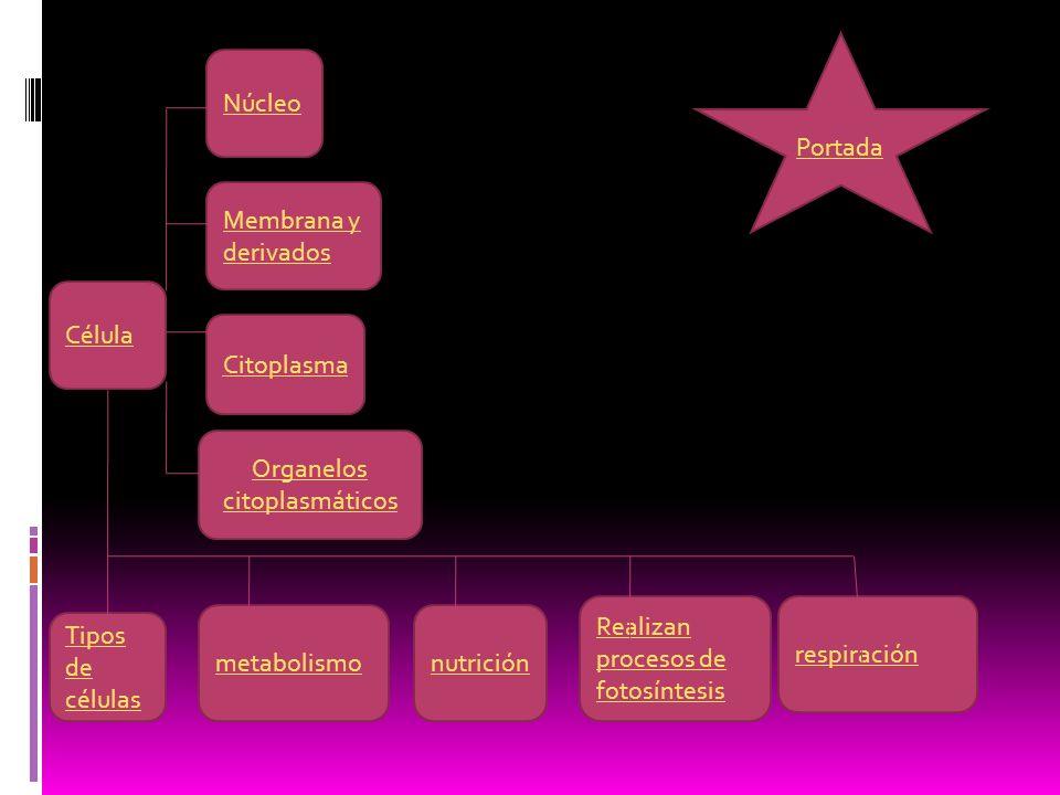 Colegio de bachilleres plantel 8 cuajimalpa.Tema: la célula Materia: bilogía y tic II Integrantes.