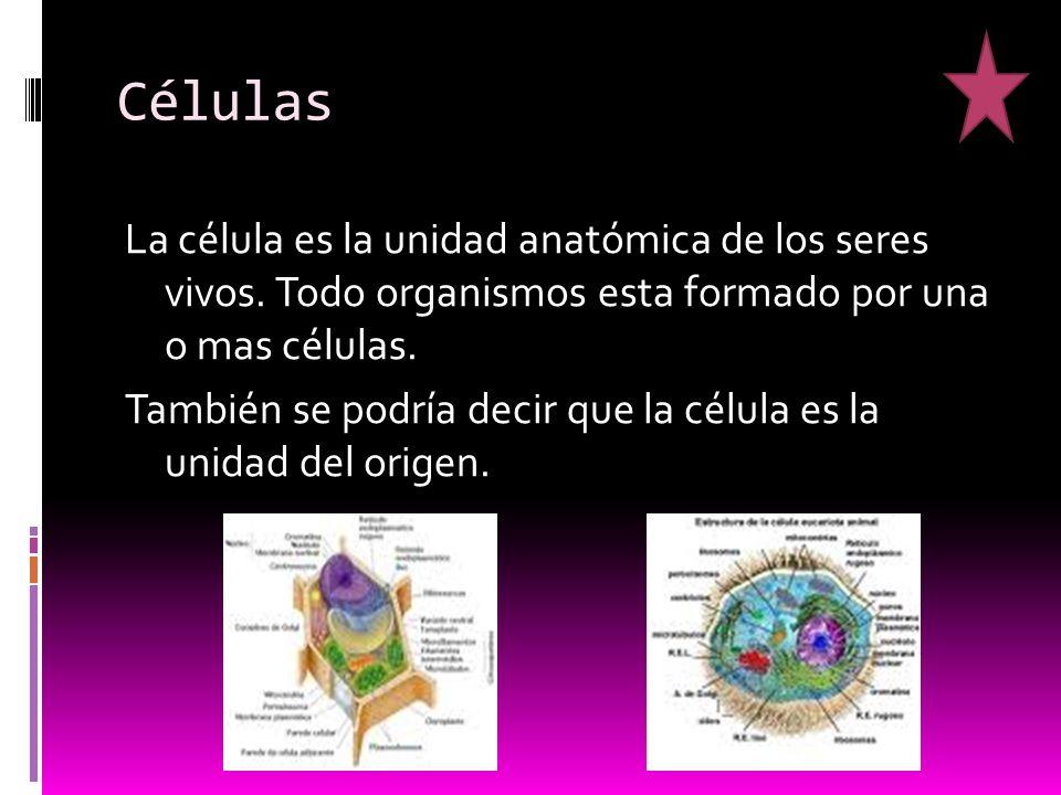 Células La célula es la unidad anatómica de los seres vivos.