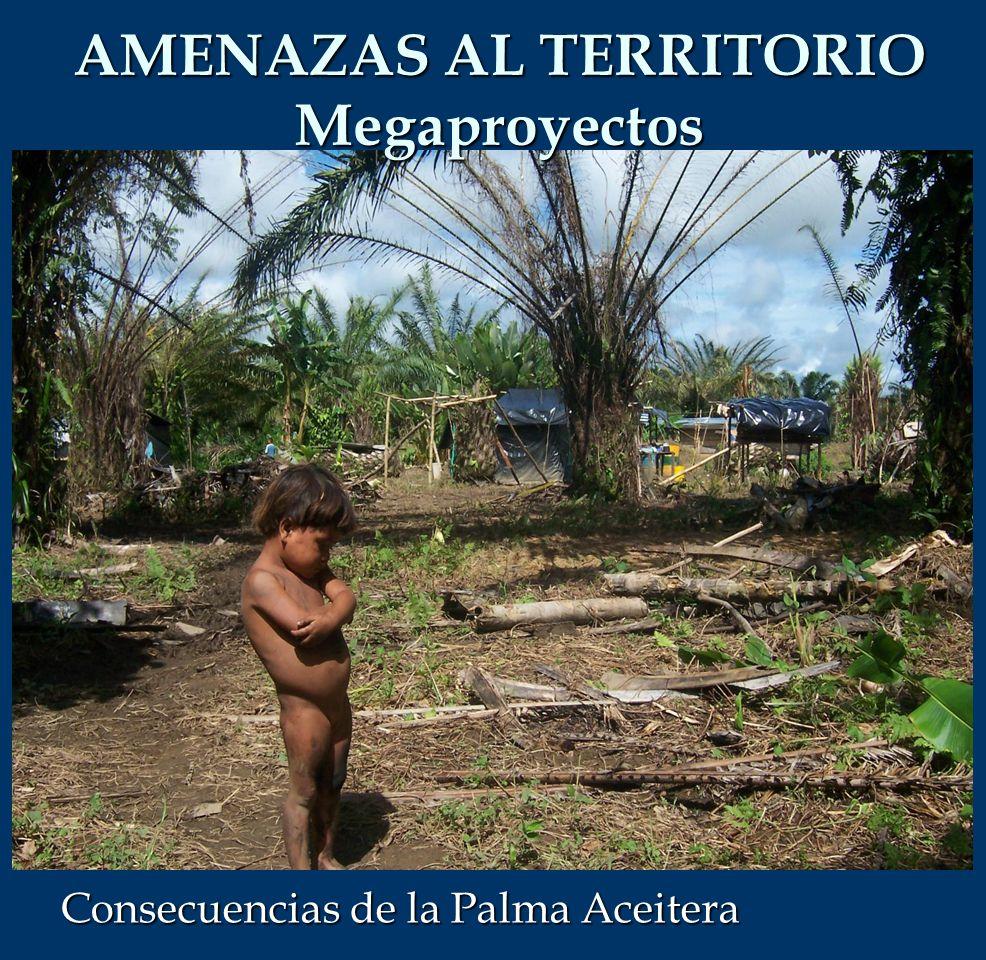 Consecuencias de la Palma Aceitera AMENAZAS AL TERRITORIO Megaproyectos