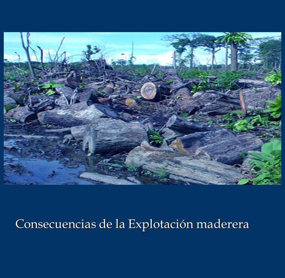 Consecuencias de la Explotación maderera