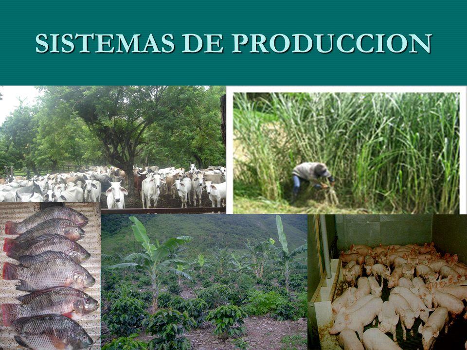 SECRETARIA DE AGRICULTURA Y MEDIO AMBIENTE