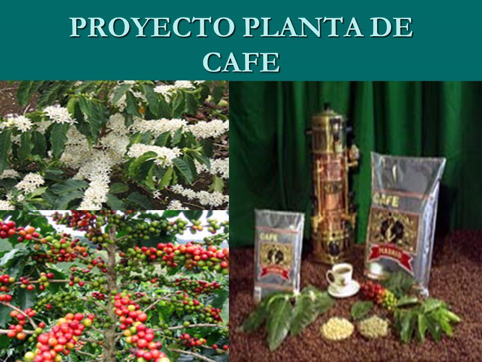 PROYECTO PLANTA DE CAFE