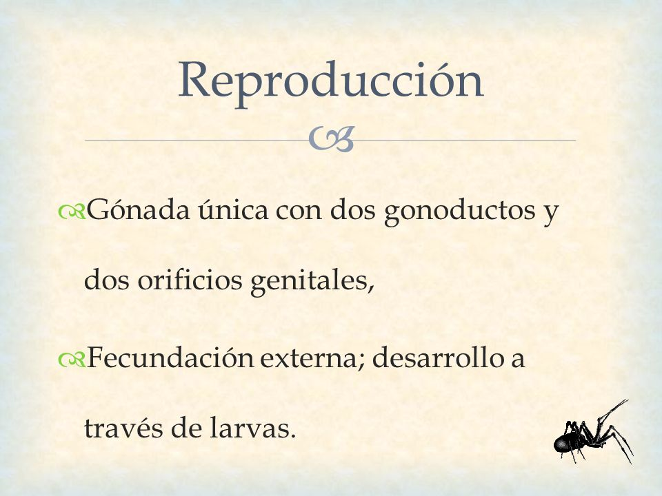 Gónada única con dos gonoductos y dos orificios genitales, Fecundación externa; desarrollo a través de larvas. Reproducción