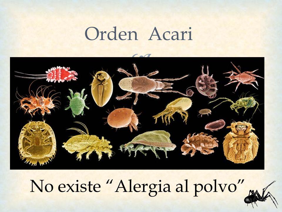 Orden Acari No existe Alergia al polvo
