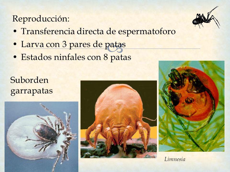 Reproducción: Transferencia directa de espermatoforo Larva con 3 pares de patas Estados ninfales con 8 patas Suborden garrapatas Limnesia