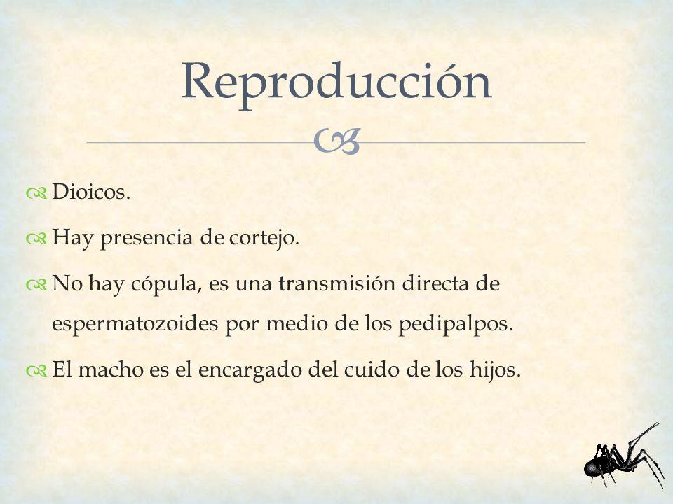Dioicos. Hay presencia de cortejo. No hay cópula, es una transmisión directa de espermatozoides por medio de los pedipalpos. El macho es el encargado
