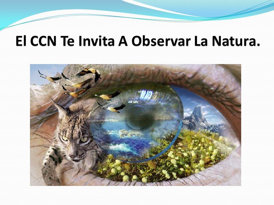 El CCN Te Invita A Observar La Natura.