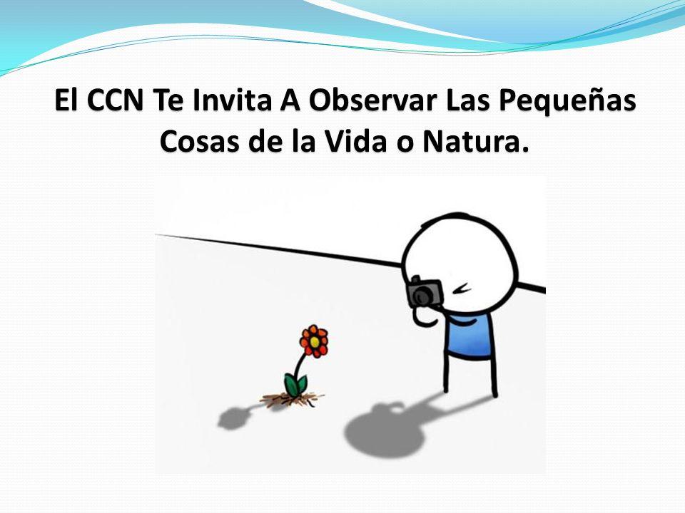 El CCN Te Invita A Observar Las Pequeñas Cosas de la Vida o Natura.
