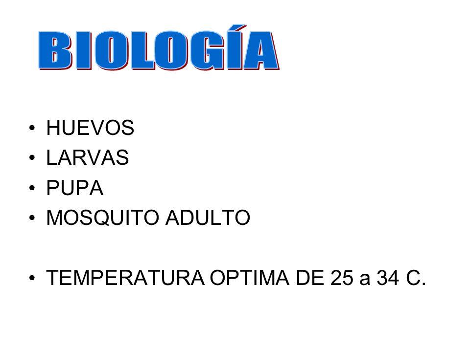 HUEVOS LARVAS PUPA MOSQUITO ADULTO TEMPERATURA OPTIMA DE 25 a 34 C.