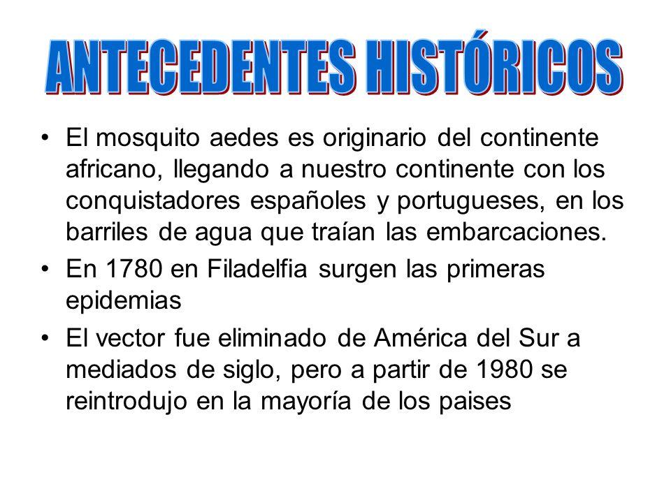 El mosquito aedes es originario del continente africano, llegando a nuestro continente con los conquistadores españoles y portugueses, en los barriles