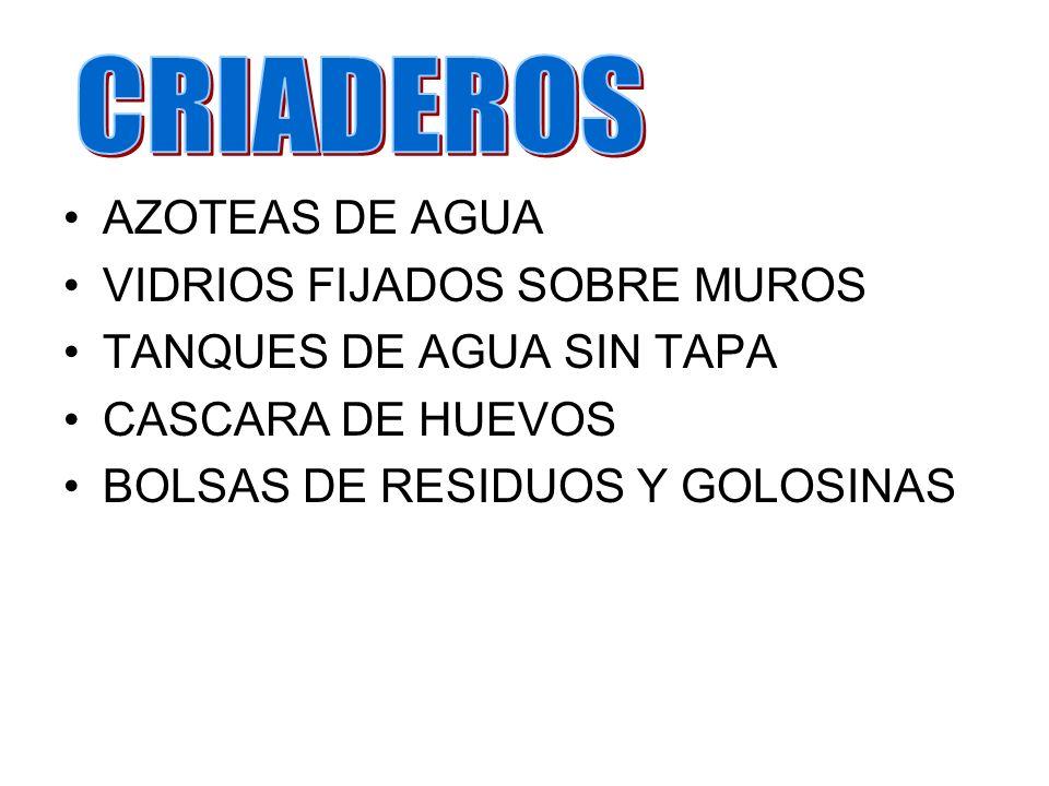 AZOTEAS DE AGUA VIDRIOS FIJADOS SOBRE MUROS TANQUES DE AGUA SIN TAPA CASCARA DE HUEVOS BOLSAS DE RESIDUOS Y GOLOSINAS