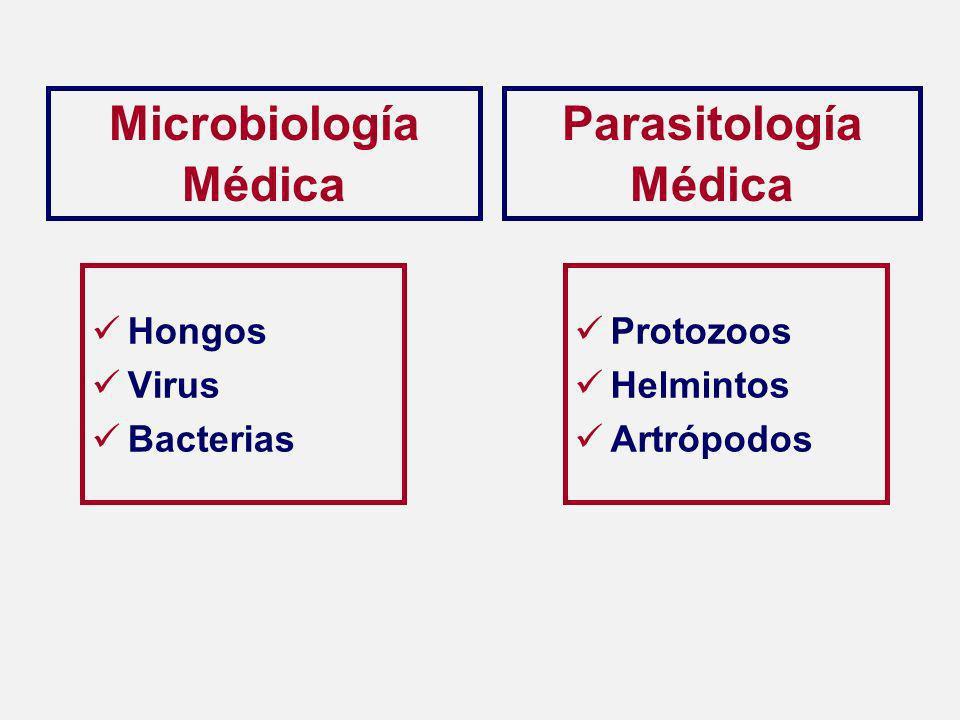 Hongos Virus Bacterias Protozoos Helmintos Artrópodos Microbiología Médica Parasitología Médica