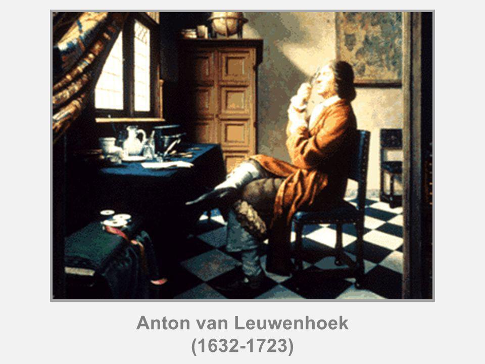 Anton van Leuwenhoek (1632-1723)