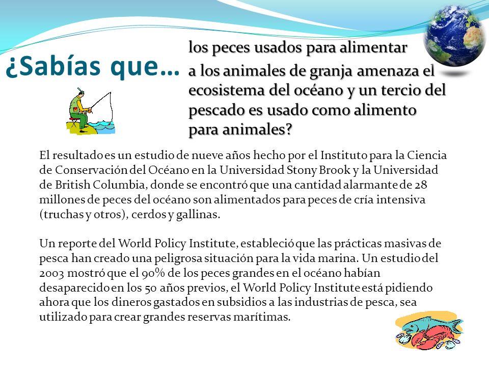 los peces usados para alimentar a los animales de granja amenaza el ecosistema del océano y un tercio del pescado es usado como alimento para animales
