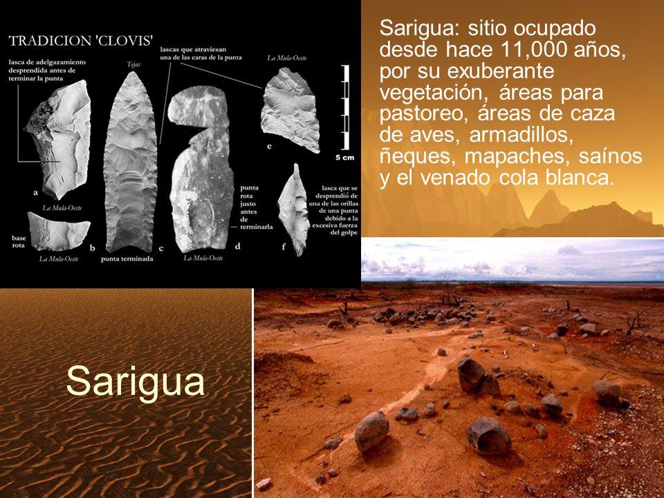 Sarigua Sarigua: sitio ocupado desde hace 11,000 años, por su exuberante vegetación, áreas para pastoreo, áreas de caza de aves, armadillos, ñeques, mapaches, saínos y el venado cola blanca.