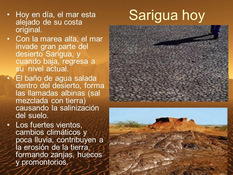 Sarigua hoy Hoy en día, el mar esta alejado de su costa original.